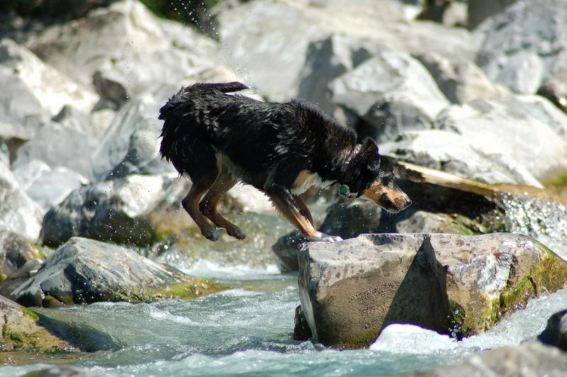 Wasser - Steinhüpfer
