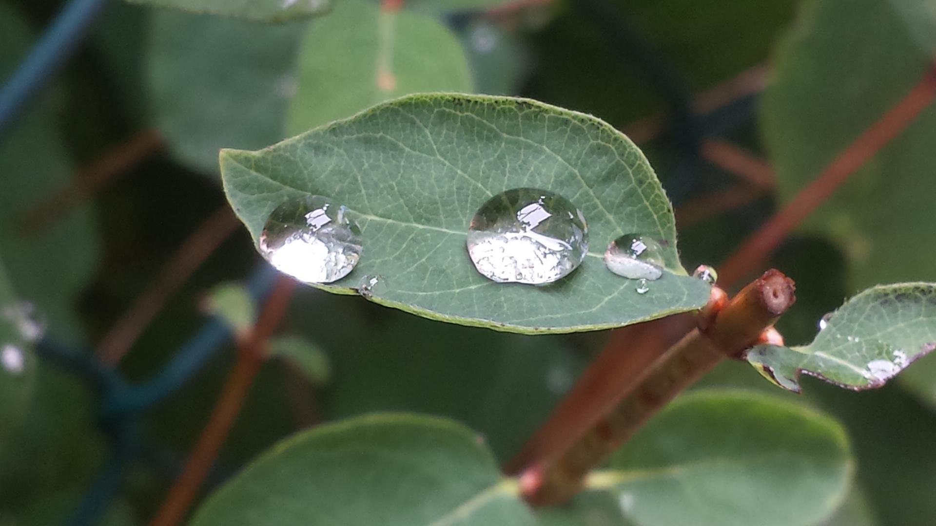Wasser trifft ein Blatt