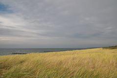 Wasser- und Grasmeer