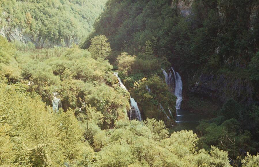 Wasser, Wald und Felsen: Wald