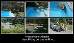 wasser-wild-schweine