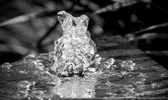 'Wasserbärchen'
