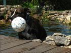 Wasserball...