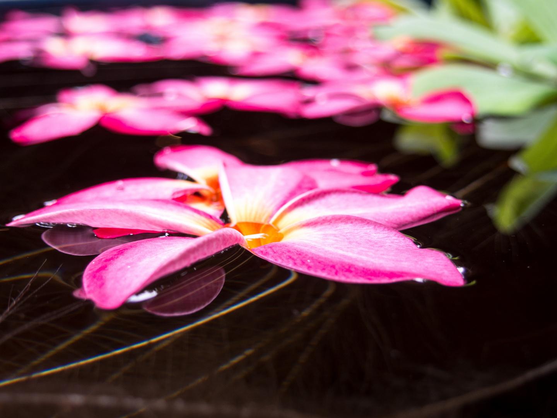 Wasserblüte