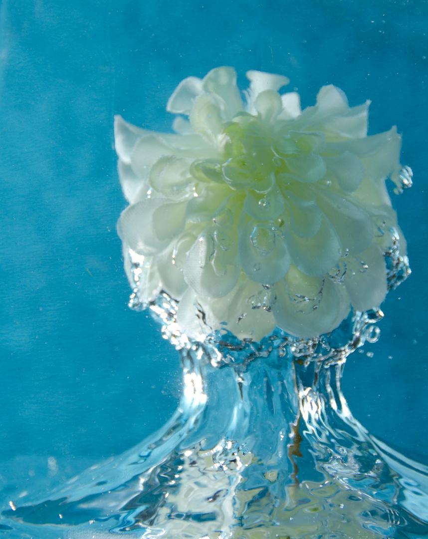Wasserblume Foto Bild Experimente Speed Spezial Bilder Auf