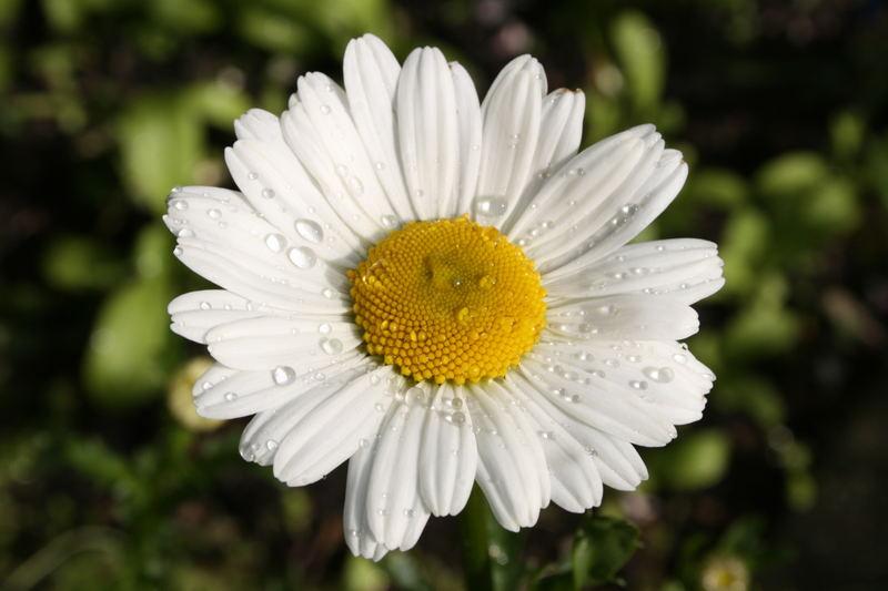 Wasserblume Foto Bild Natur Pflanzen Youth Bilder Auf