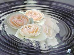 Wasserblumen oder -spiegelungen 2