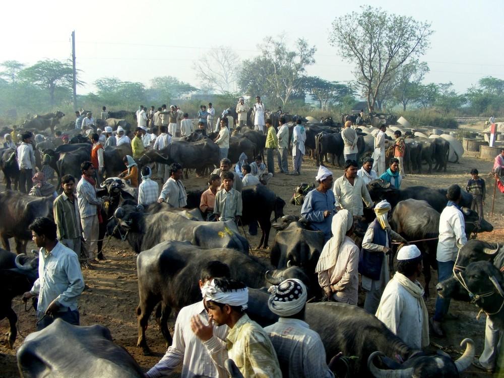 Wasserbüffel Markt in der Nähe von Agra