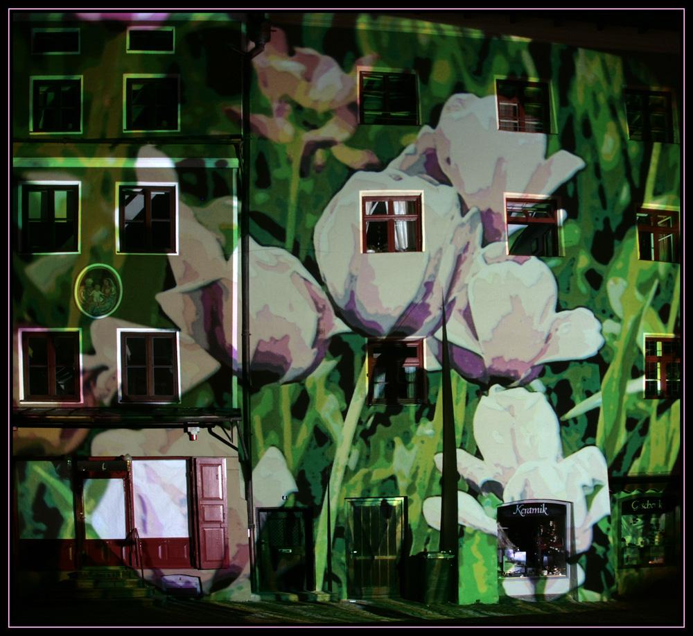 Wasserburg leuchtet - Tulpenhaus