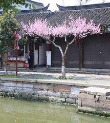 Wasserdorf  Zhujiajiao