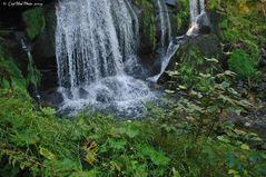 Wasserfall Triberg und grüne Fauna