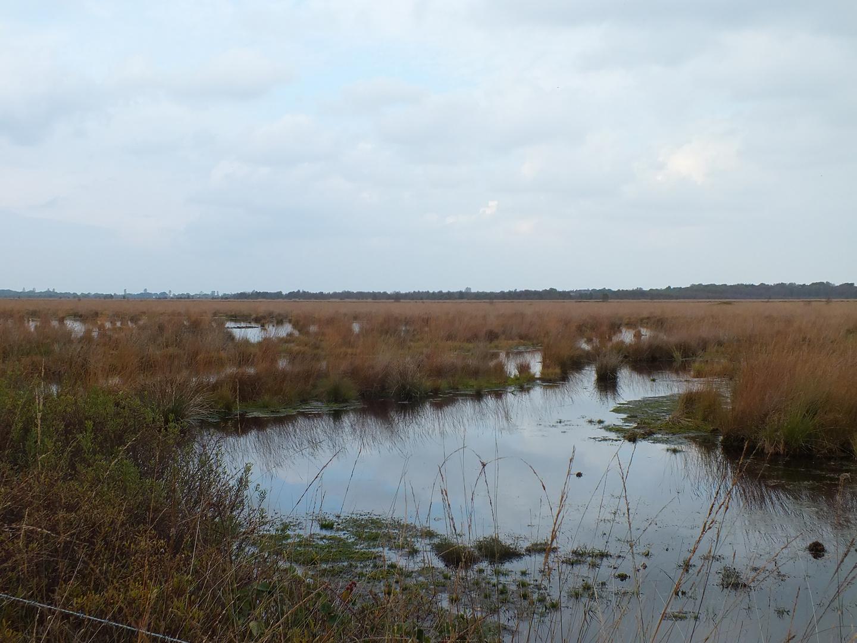Wasserflächen im Ahlenmoor