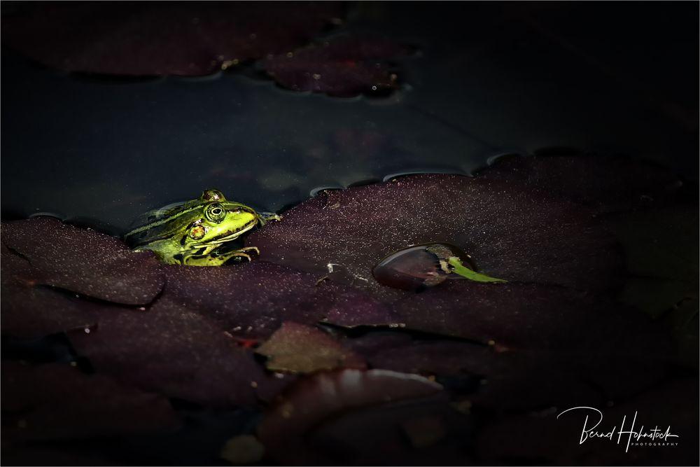 Wasserfrosch ....