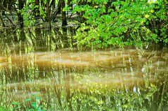 Wassergeister im Illwald