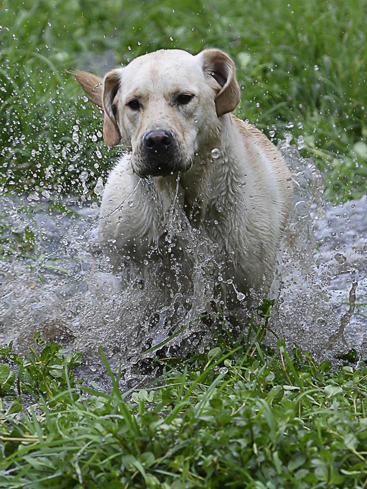 Wasserhund ...