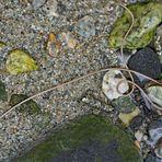 Wasserkalb: ein Saitenwurm im Bergbach!  -  Nematomorpha: comme un mini-serpent dans l'eau!