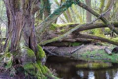 Wasserlauf im Naturschutzgebiet Mönchbruch