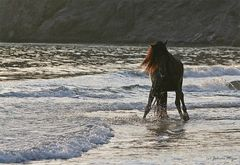 Wasser/Licht/Pferd