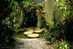 """Wasserlilie """"Victoria Amazonica"""" (3)"""