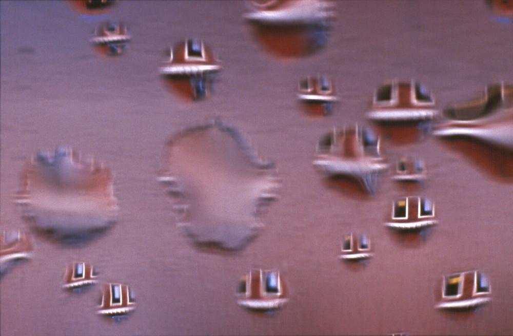 Wasserlinsen dalisch