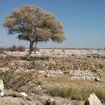Wasserloch Etoshapfanne