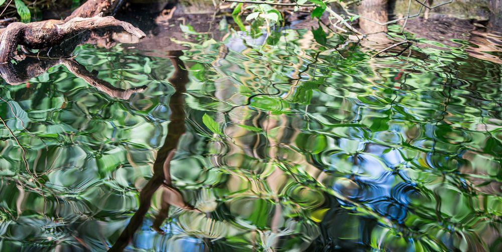 Wassermosaik