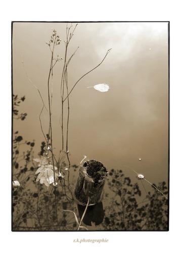 Wasserpfostengrasblatt