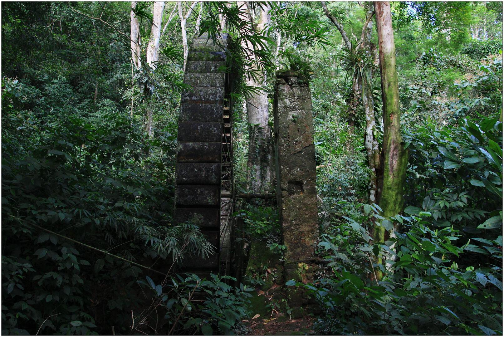 wasserrad im urwald foto  bild  world wald ruine
