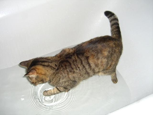 Wasserratte..ääh,Katze!