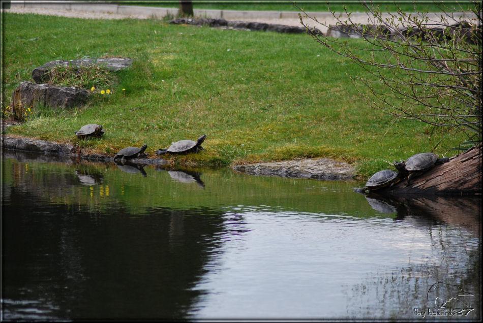 Wasserschildkröten im Botanischen Garten Bonn