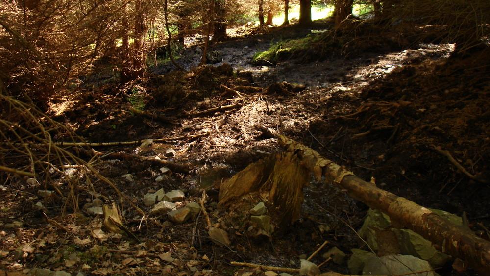 Wasserspeicher Wald