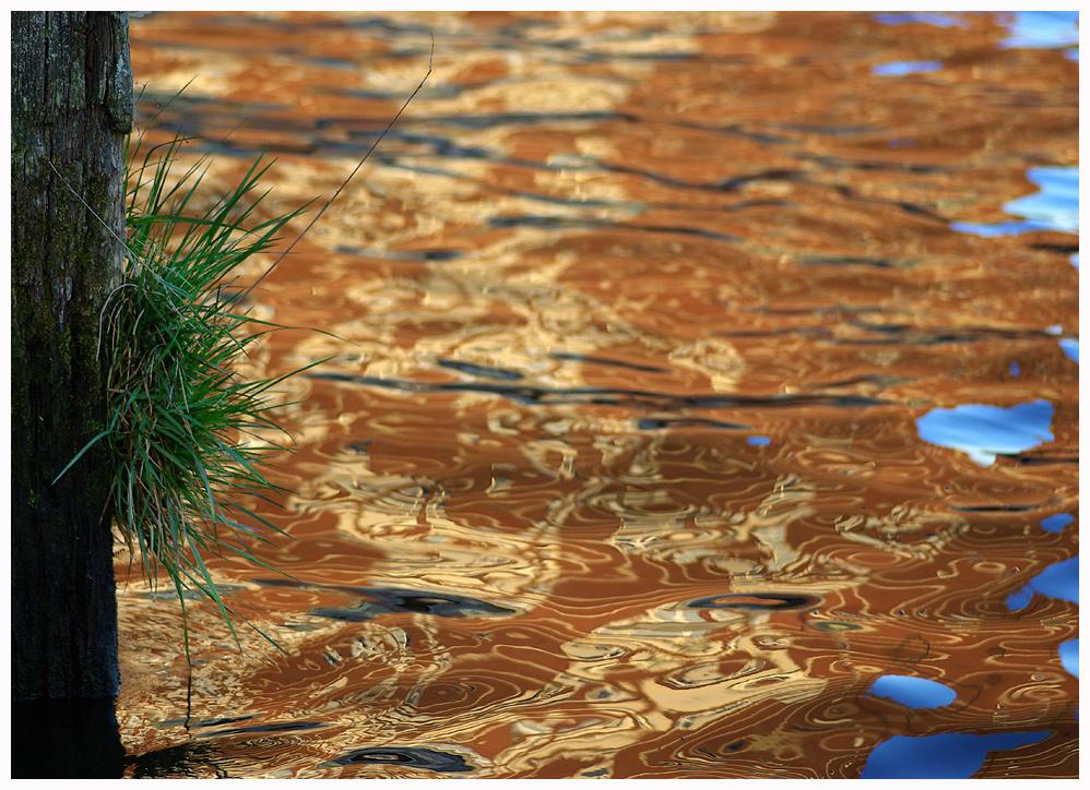 Wasserspiegelung mit Gras