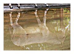 Wasserspieglein