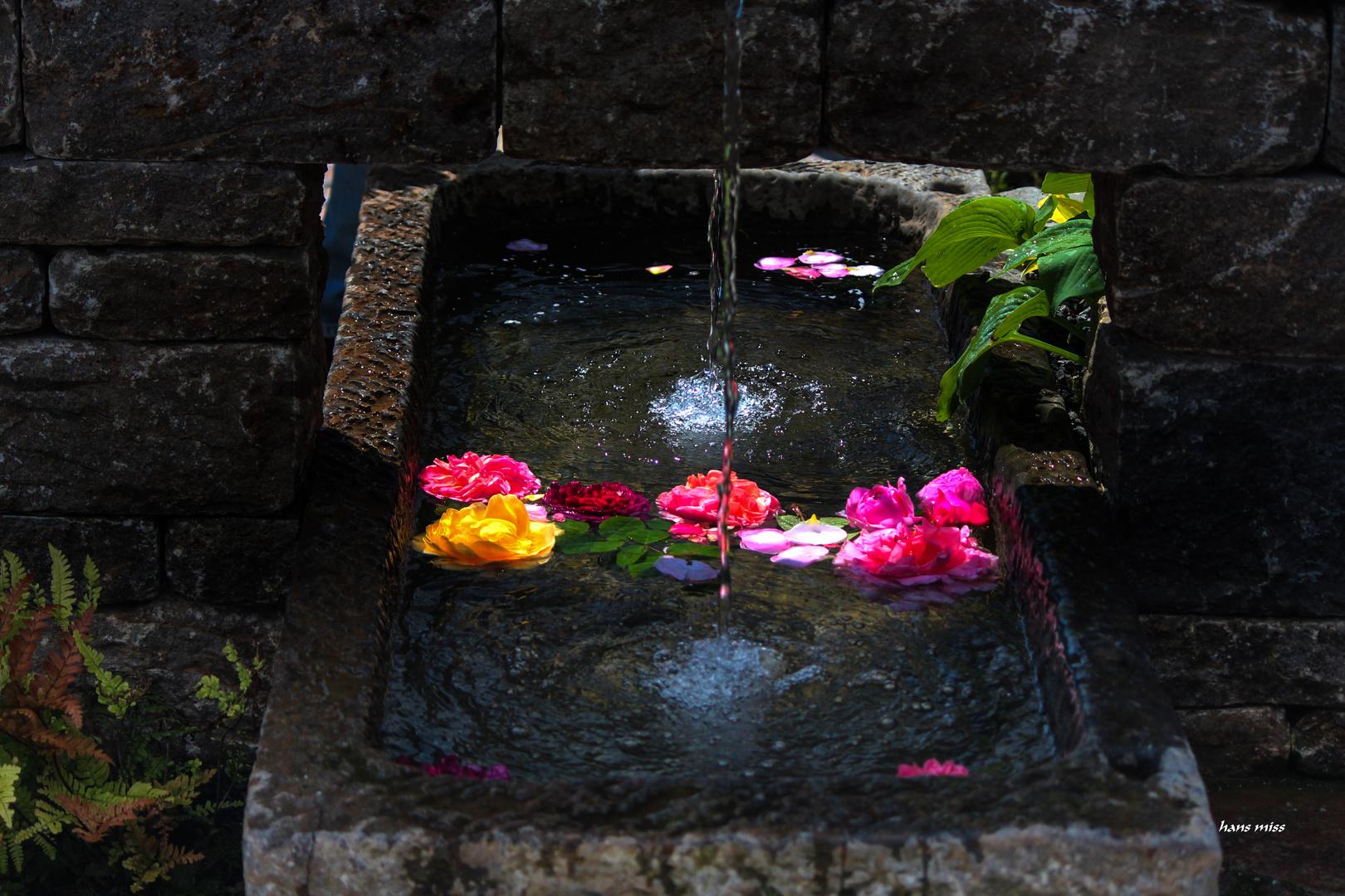 Wasserspiel mit Rosenblüten