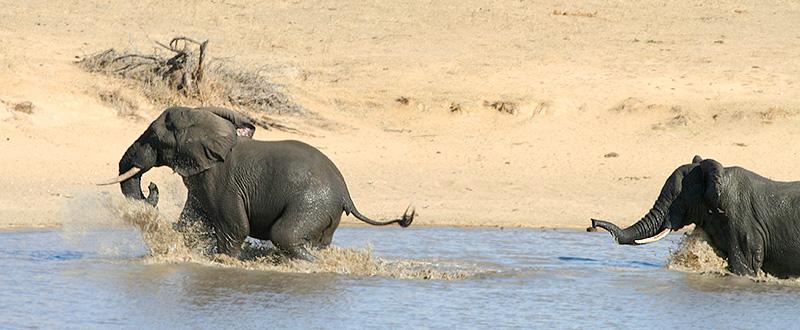 Wassersport für Dickhäuter