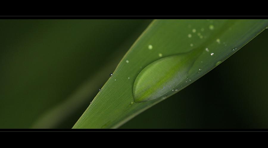 Wassertropfen auf Bambusblatt
