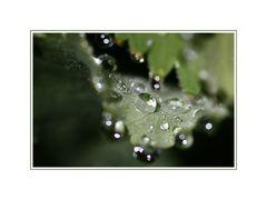 ~ Wassertropfen im Focus ~
