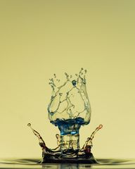 Wassertulpe
