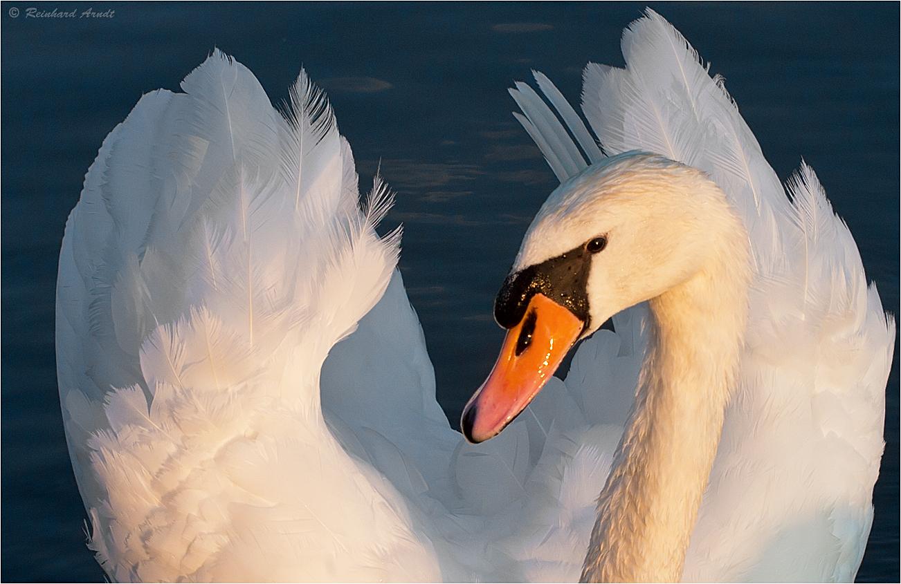Wasservögel #2