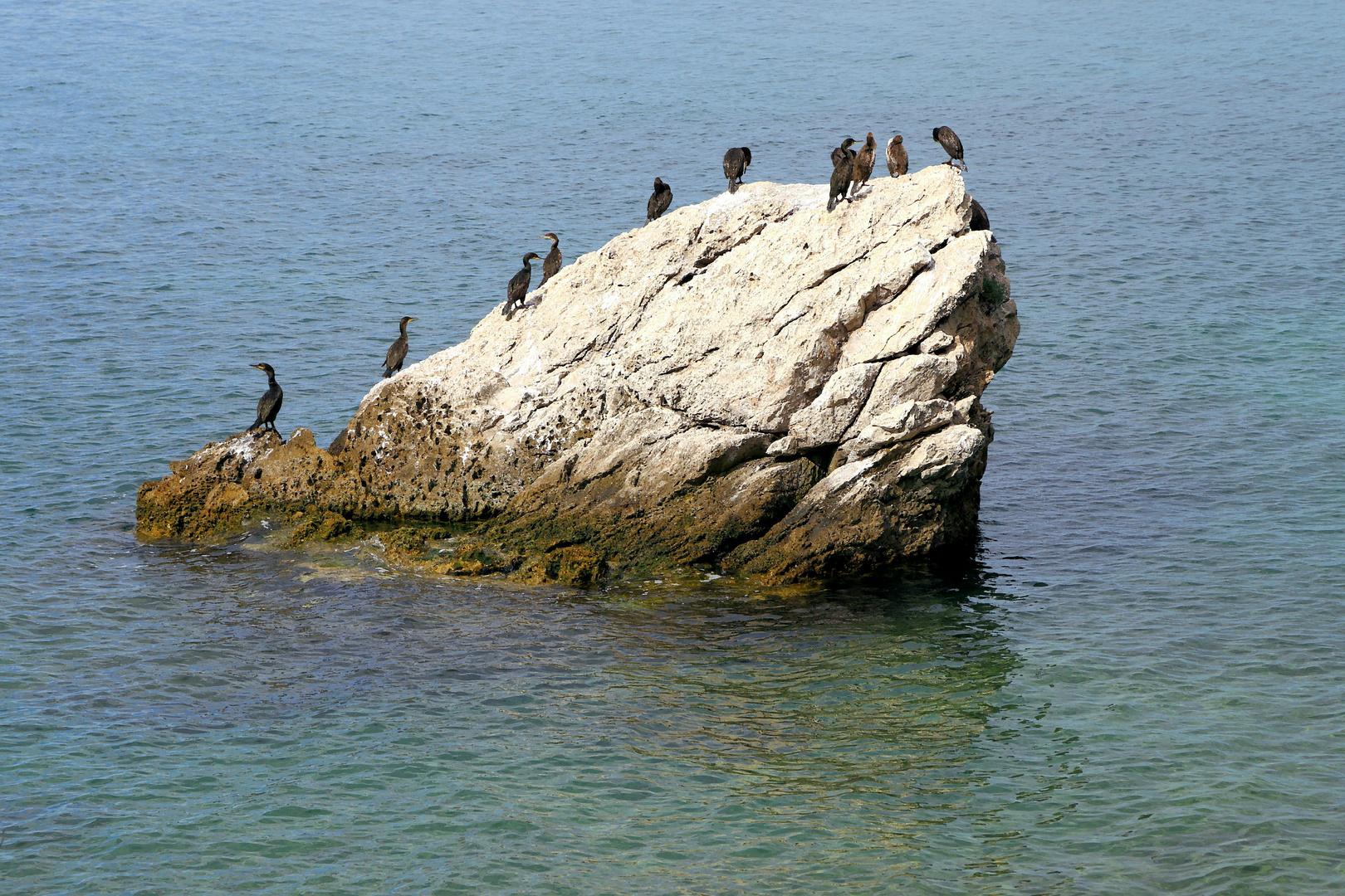 Wasservögel 8