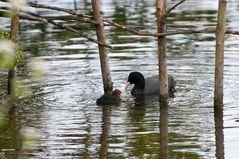Wasservögel im langen Wasser #2