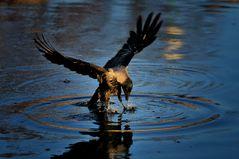 Wasservogel?