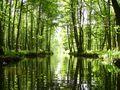 Wasserwald by Lothar Reeg