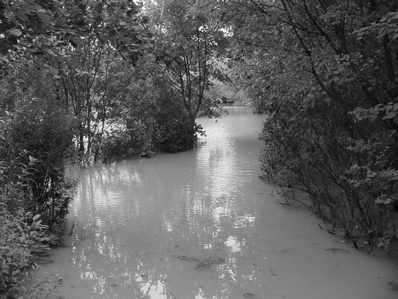 Wasserwald ...
