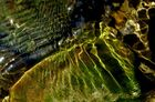 wasserwellenlichtreflexe in grünbraun ...