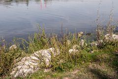 Wasserwelt Wöhrder See  - 2  -
