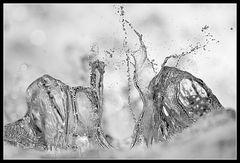 wasserwesen :: anmut und hochmut