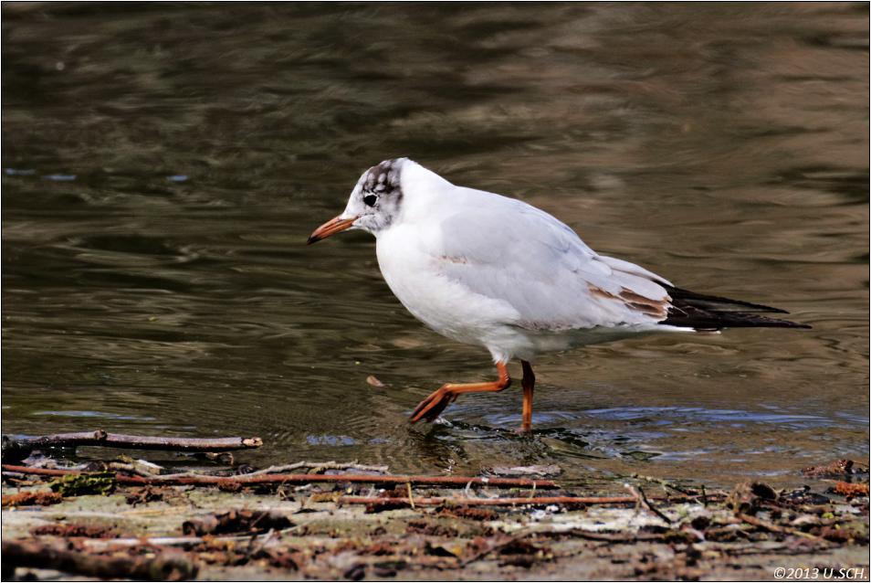 Wat-Vogel