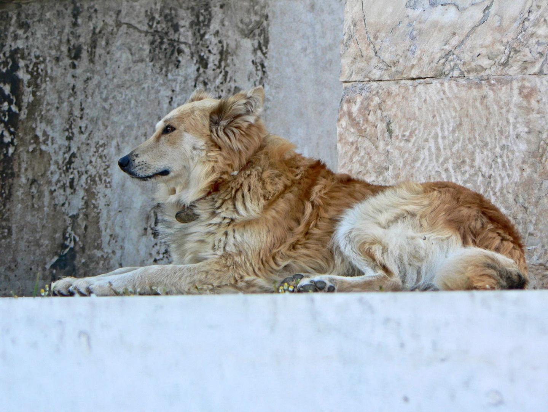 Watchdog at Hadrian's Library