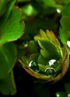 ~ Water drops ~
